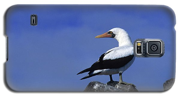 Masked Booby Bird Galaxy S5 Case by Thomas Wiewandt