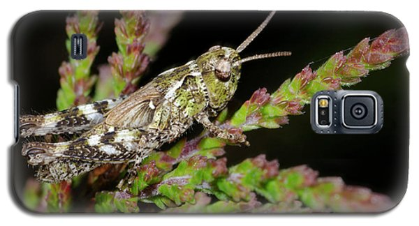 Mottled Grasshopper Juvenile Galaxy S5 Case by Nigel Downer