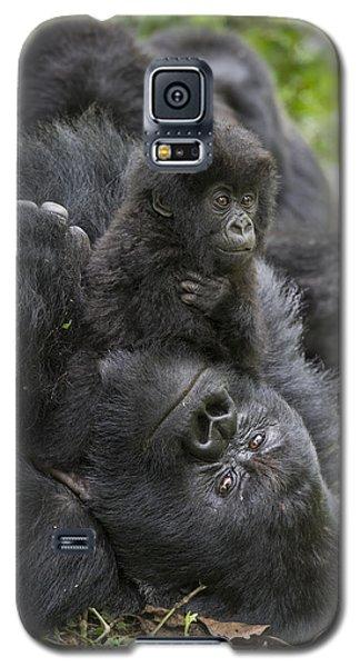 Mountain Gorilla Baby Playing Galaxy S5 Case by Suzi  Eszterhas