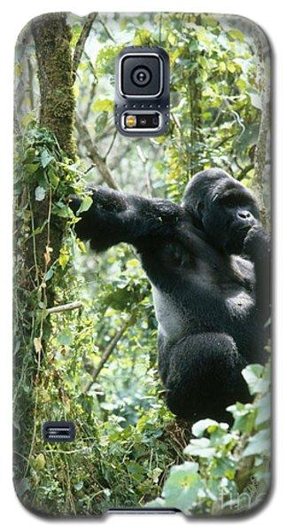 Mountain Gorilla Galaxy S5 Case by Tierbild Okapia