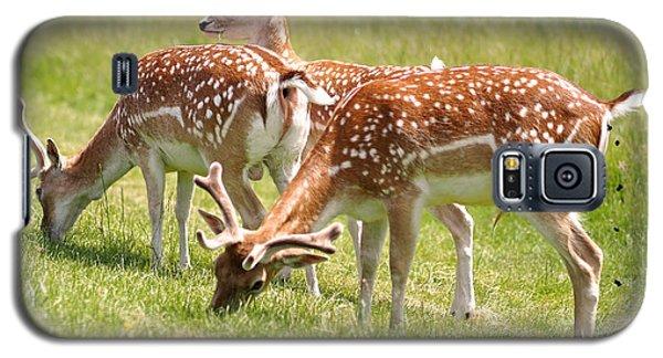 Multitasking Deer In Richmond Park Galaxy S5 Case by Rona Black
