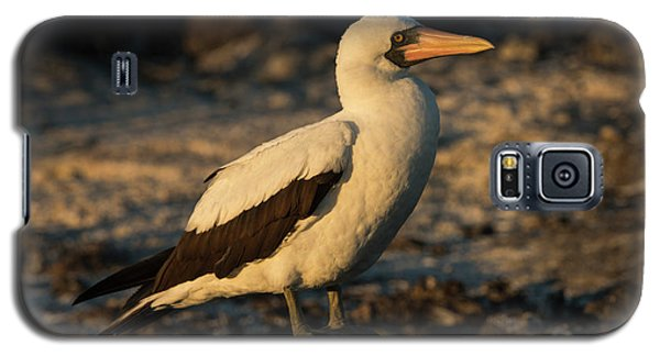 Nazca Booby (sula Granti Galaxy S5 Case by Pete Oxford