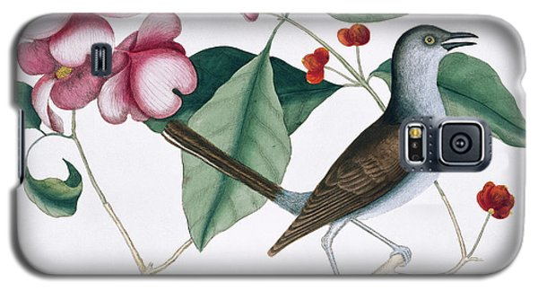 Northern Mockingbird Galaxy S5 Case by Natural History Museum, London