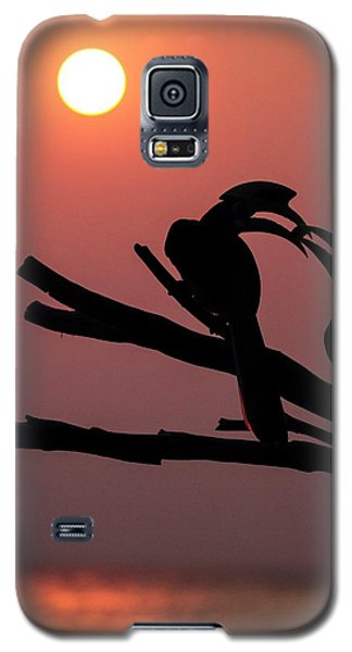 Oriental Pied Hornbills Galaxy S5 Case by Paul Williams