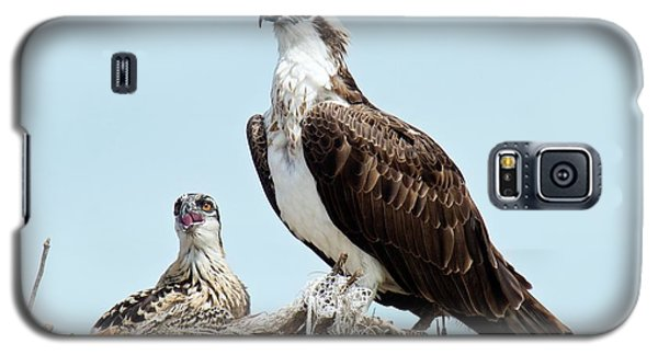 Osprey And Chick Galaxy S5 Case by Bob Gibbons