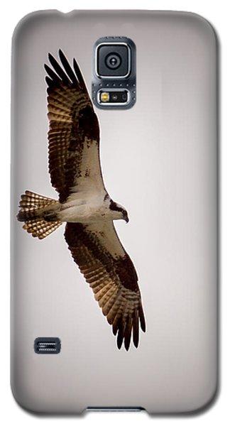 Osprey Galaxy S5 Case by Ernie Echols