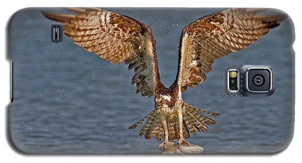 Osprey Morning Catch Galaxy S5 Case by Susan Candelario