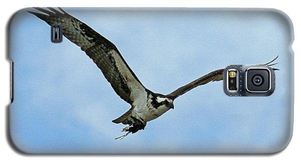 Osprey Nest Building Galaxy S5 Case by Ernie Echols