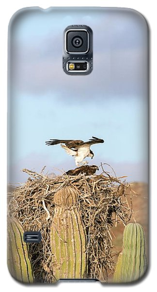 Ospreys Nesting In A Cactus Galaxy S5 Case by Christopher Swann