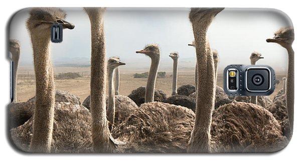 Ostrich Heads Galaxy S5 Case by Johan Swanepoel