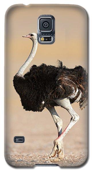 Ostrich Galaxy S5 Case by Johan Swanepoel
