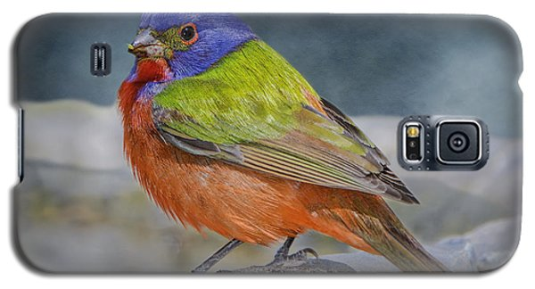 Painted Bunting In April Galaxy S5 Case by Bonnie Barry