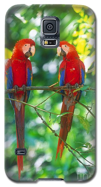 Pair Of Scarlet Macaws Galaxy S5 Case by Art Wolfe
