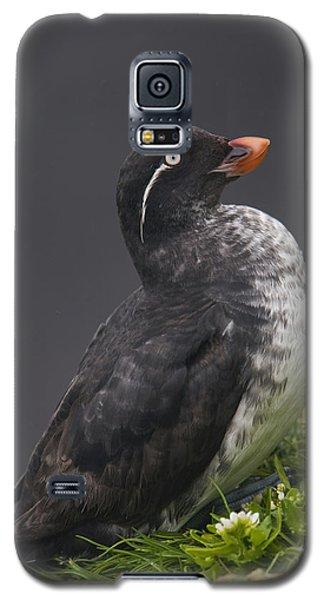 Parakeet Auklet Sitting In Green Galaxy S5 Case by Milo Burcham