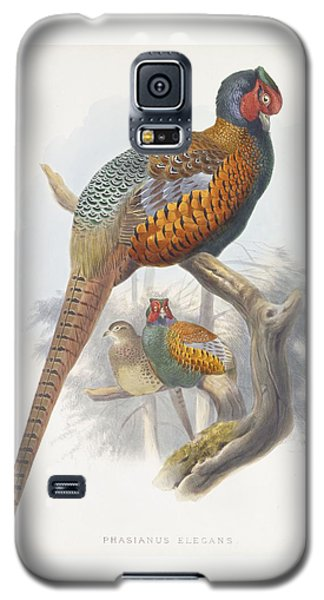 Phasianus Elegans Elegant Pheasant Galaxy S5 Case by Daniel Girard Elliot