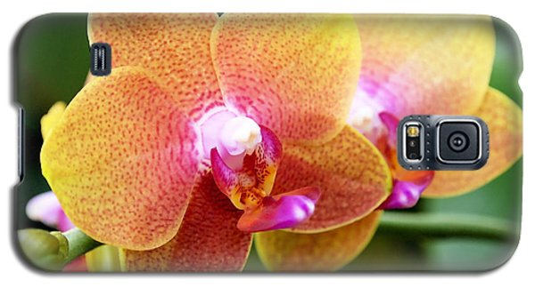 Pink Yellow Orchid Galaxy S5 Case by Rona Black