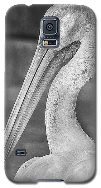Portrait Of A Pelican Galaxy S5 Case by Jon Woodhams