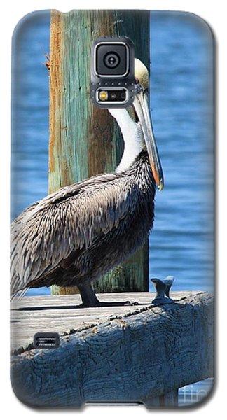 Posing Pelican Galaxy S5 Case by Carol Groenen