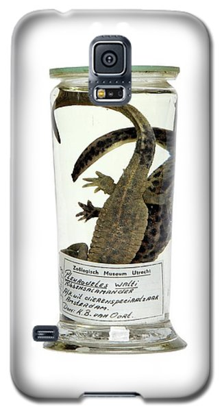 Preserved Newts Galaxy S5 Case by Gregory Davies