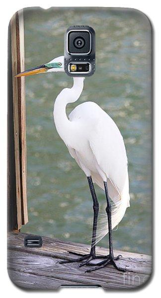 Pretty Great Egret Galaxy S5 Case by Carol Groenen