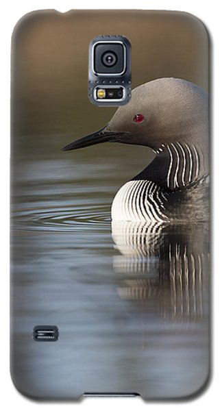 Profile Of A Pacific Loon Galaxy S5 Case by Tim Grams
