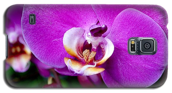Purple Orchid Galaxy S5 Case by Rona Black