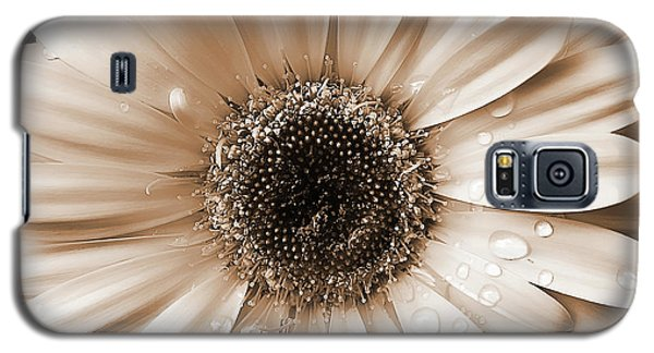 Plant Galaxy S5 Cases - Rainsdrops on Gerber Daisy Sepia Galaxy S5 Case by Jennie Marie Schell