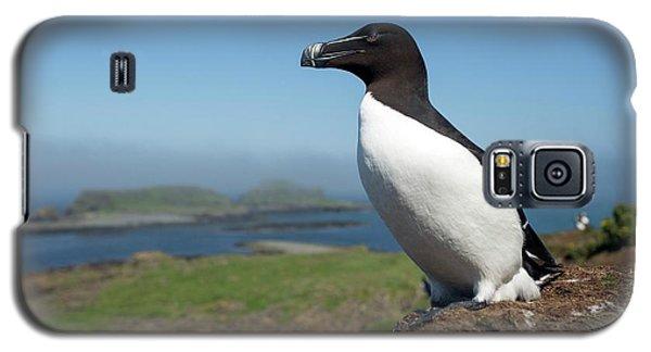 Razorbill On A Coastal Ledge Galaxy S5 Case by Simon Booth