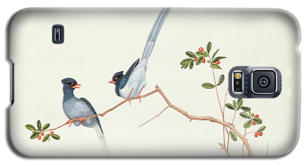 Red Billed Blue Magpies On A Branch With Red Berries Galaxy S5 Case by Chinese School