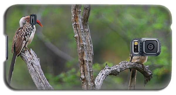 Red-billed Hornbills Galaxy S5 Case by Bruce J Robinson