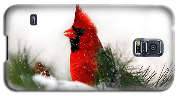 Red Cardinal Galaxy S5 Case by Christina Rollo