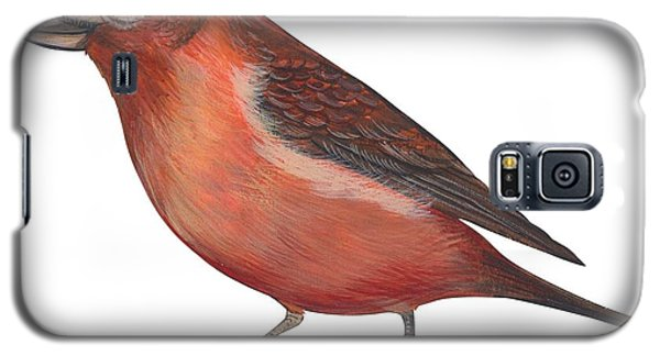 Red Crossbill Galaxy S5 Case by Anonymous