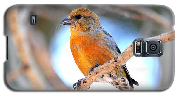 Red Crossbill On Aspen Galaxy S5 Case by Marilyn Burton