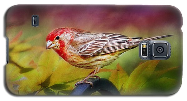 Red Finch Galaxy S5 Case by Darren Fisher