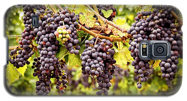 Red Grapes In Vineyard Galaxy S5 Case by Elena Elisseeva