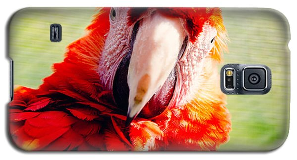 Red Macaw Galaxy S5 Case by Pati Photography