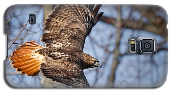 Redtail Hawk Galaxy S5 Case by Bill Wakeley