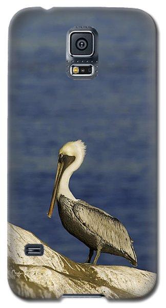 Bird Galaxy S5 Cases - Resting Pelican Galaxy S5 Case by Sebastian Musial