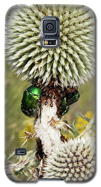Rose Chafers And Ants On Thistle Flowers Galaxy S5 Case by Bob Gibbons