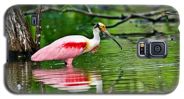 Roseate Spoonbill Wading Galaxy S5 Case by Anthony Mercieca