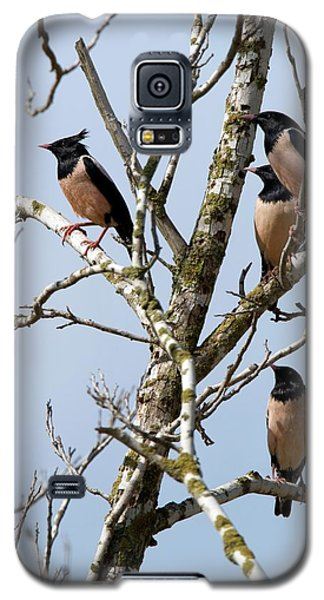 Rosy Starling (sturnus Roseus) Galaxy S5 Case by Photostock-israel