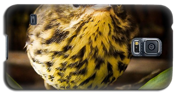 Round Warbler Galaxy S5 Case by Karen Wiles