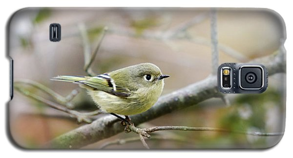 Ruby-crowned Kinglet Galaxy S5 Case by Christina Rollo