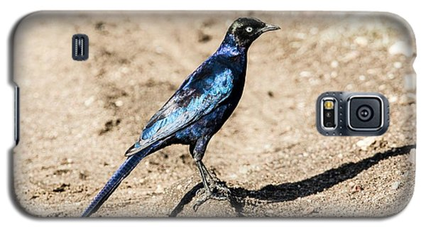 Ruppell's Glossy-starling Galaxy S5 Case by Photostock-israel