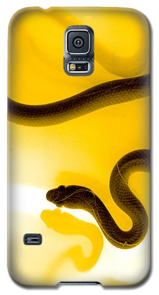Yellow Galaxy S5 Cases - S Galaxy S5 Case by Holly Kempe