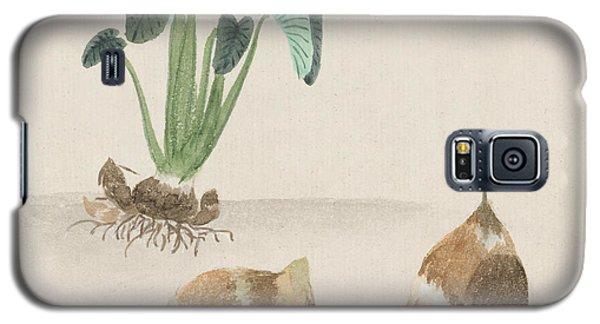Satoimo Taro Potato  Galaxy S5 Case by Aged Pixel