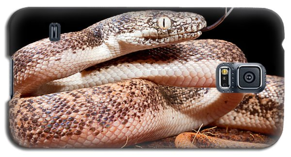 Savu Python In Defensive Posture Galaxy S5 Case by David Kenny