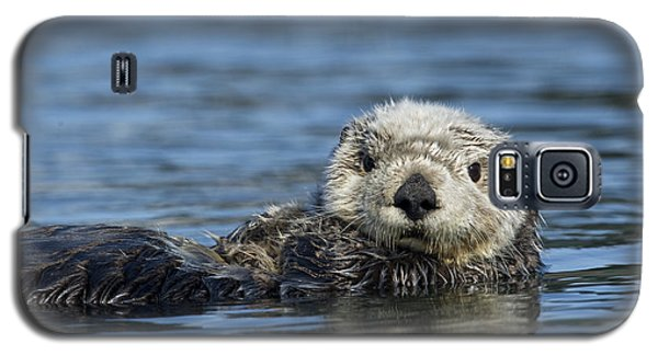 Sea Otter Alaska Galaxy S5 Case by Michael Quinton