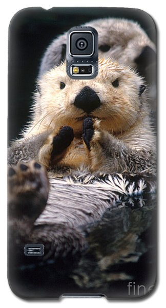 Sea Otter Pup Galaxy S5 Case by Mark Newman