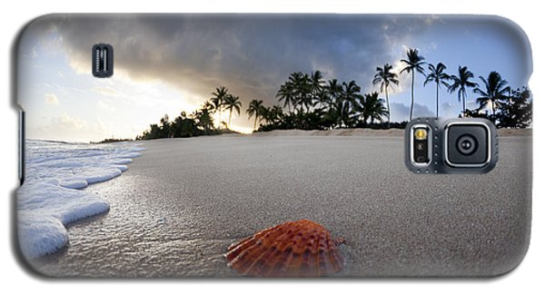 Seascape Galaxy S5 Cases - Sea Shell Sunrise Galaxy S5 Case by Sean Davey